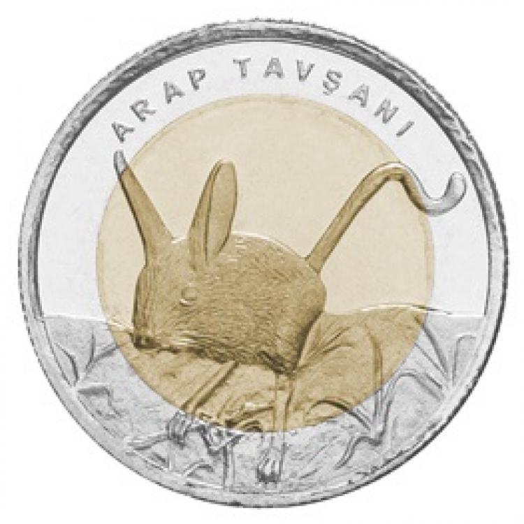 Arap Tavşanı 2016 Çil